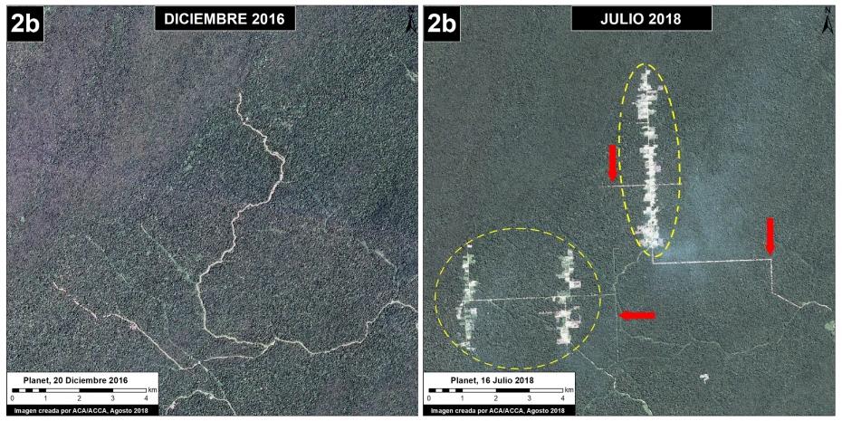Nuevos Proyectos Agrícolas Amenazan Bosque Primario en Tres Regiones
