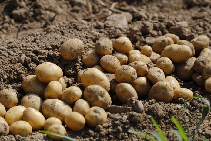 El 80% de la agricultura de Huancavelica podría afectarse por el cambio climático