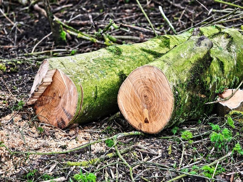 Informe revela que la tala ilegal de la Amazonía peruana continúa descontrolada