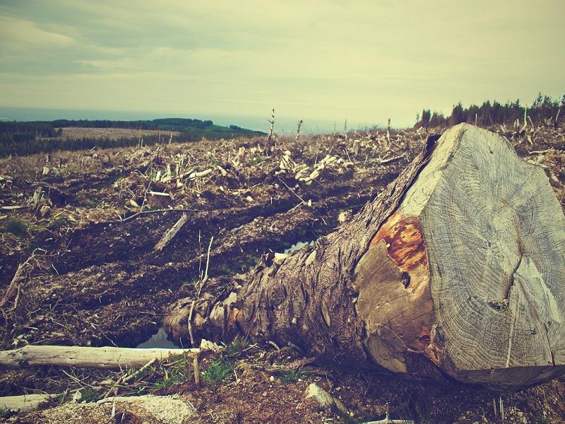 El Estado oferta concesiones forestales ilegales sobre territorios indígenas