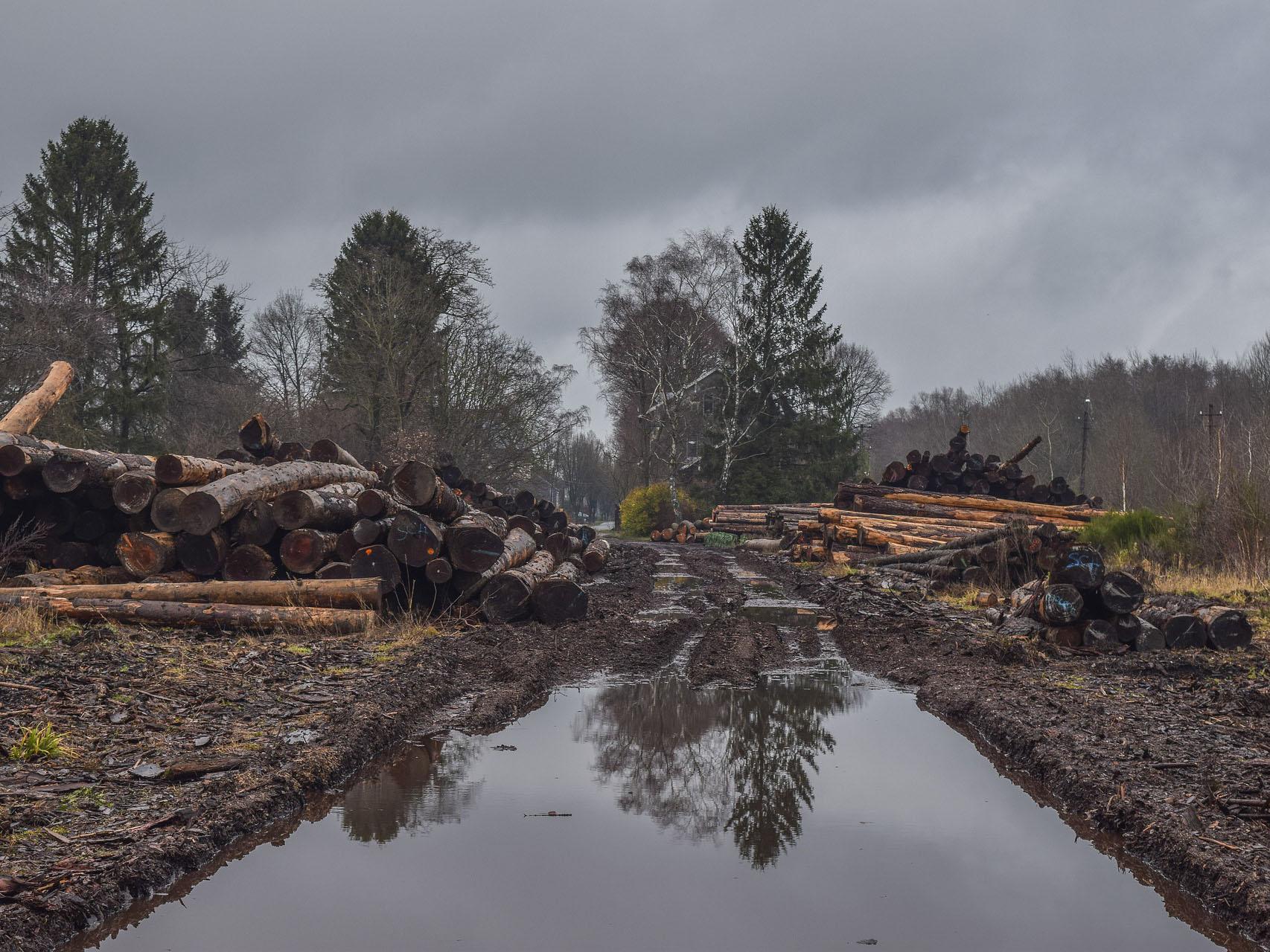 En el Perú se perdieron 147 mil hectáreas bosque y estamos precupados