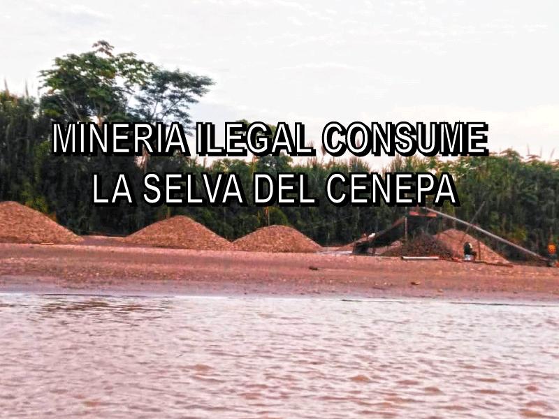 (FOTOS EXCLUSIVAS) Minería ilegal y dragado están destruyendo la selva virgen del CENEPA