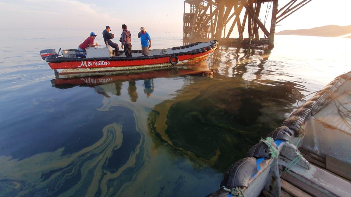 ALERTA: (FOTOS) se reportó nuevo derrame de petróleo en Piura