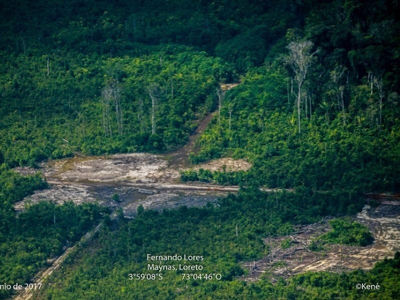 Loreto: Anulan sentencia por deforestación de 2 mil hectáreas de bosque
