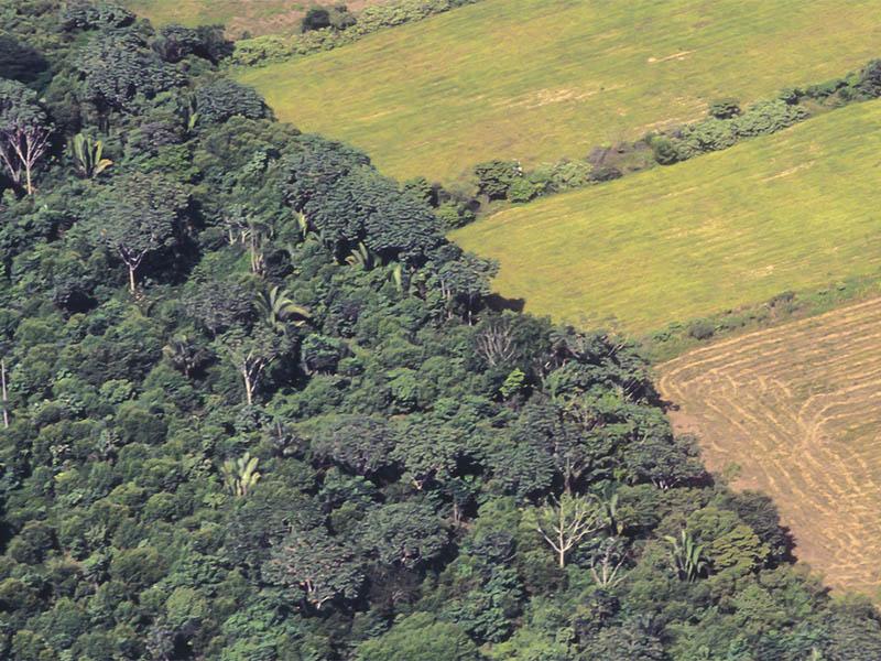 Biocombustibles y deforestación